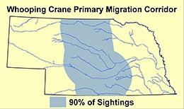 Whooping crane migration corridor through Nebraska