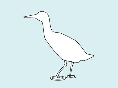waterbirds_xrail